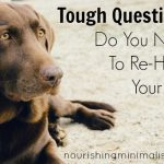 Tough Questions Do You Need To Re-Home Your Pet?