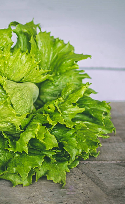lettuc