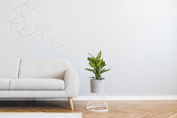 minimalist color pallette